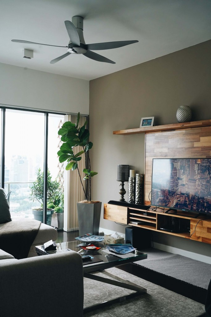 house plants in one-bedroom apartment living space